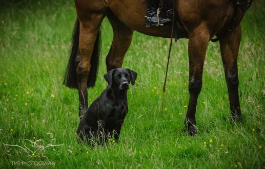 Dog_equine_Photographer_Derbyshire (64 of 74)