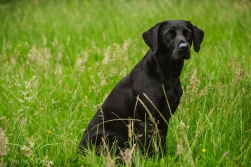 Dog_equine_Photographer_Derbyshire (67 of 74)