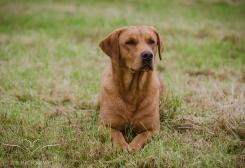 Dog_equine_Photographer_Derbyshire (7 of 74)