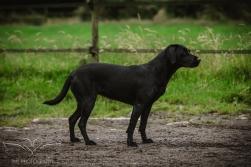 Dog_equine_Photographer_Derbyshire (74 of 74)