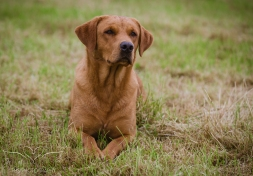 Dog_equine_Photographer_Derbyshire (8 of 74)