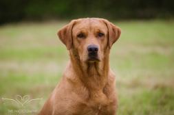 Dog_equine_Photographer_Derbyshire (9 of 74)