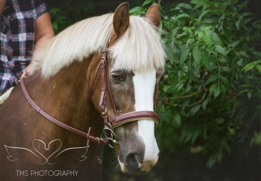 equine_phootgrapher_Staffordshire-11