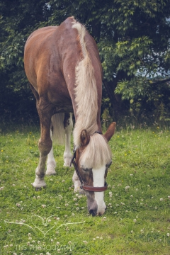 equine_phootgrapher_Staffordshire-55