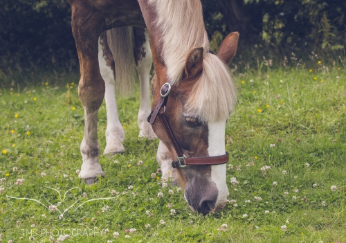 equine_phootgrapher_Staffordshire-56
