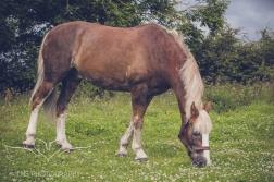 equine_phootgrapher_Staffordshire-57
