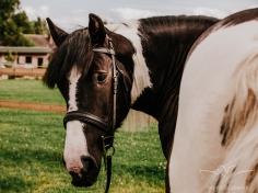 equine_photographer_derbyshire-10