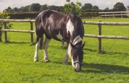 equine_photographer_derbyshire